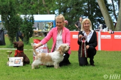 Nightdream Rhyme De Moines BEST IN SHOW VETERAN and BOS at Basset Specialty year 2012. Judge Jette Vind Ramvad