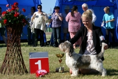 Mirepoix's Sid Vicious Group Winner at Oulu international dogshow year 2011