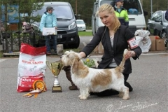 Nightdream Rhyme De Moines BEST OF BREED & BIS-3 at Basset Specialty. Judged by Gavin Robertson