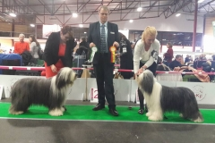 Curiosity Hey I'm Flying BEST OF BREED and Group 5th at Riga (Latvia) international dogshow 2016