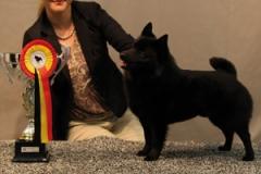 Schipperke Shalako's 'n Coros Cattin' Around BEST OF BREED and World Winner 2011 in Paris