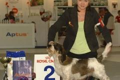 Nightdream Jo De La Vallee BOB & Group 2 year at Helsinki international dogshow  2007