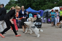 Happy picture when Minskuhoffs Grand Olivienne won Best of Breed and Group 2nd year 2013. Photo by Jari Kunnari