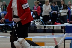 Minskuhoffs Grand Olivienne BEST OF BREED at Nordic Winner Show 2013