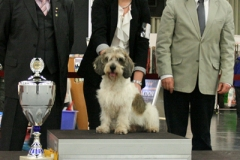 Mirepoix´s La Vraie Affaire BEST IN SHOW in Germany