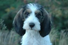puppy Madde