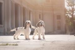 pups-small